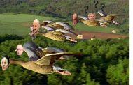 """Zboară """"păsările călătoare"""", zboară. Departe de """"cuib"""", cât mai departe."""